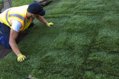 "<a href=""/sod-installation/"">Sod Installation</a>"