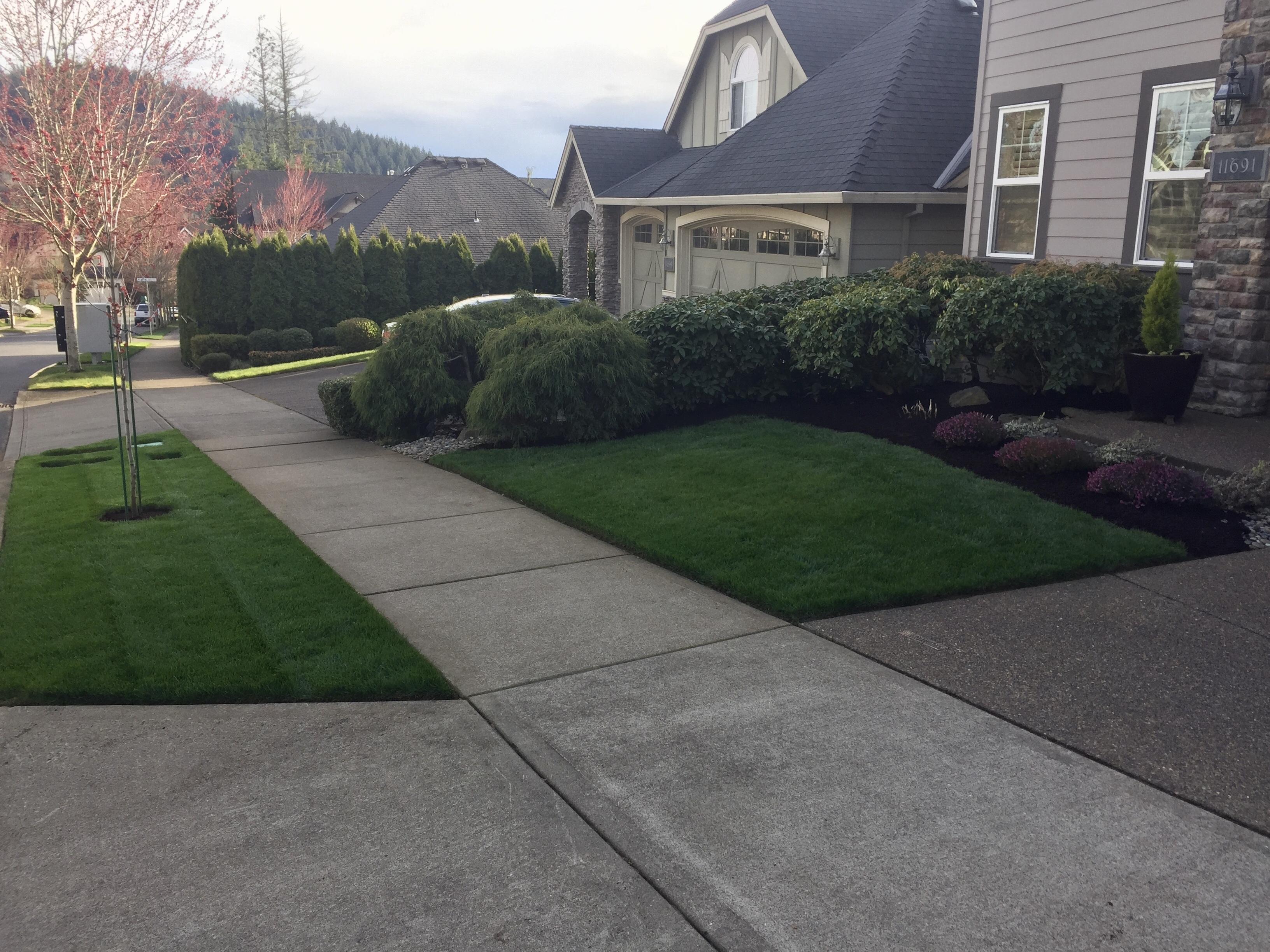Freshly landscaped lawn