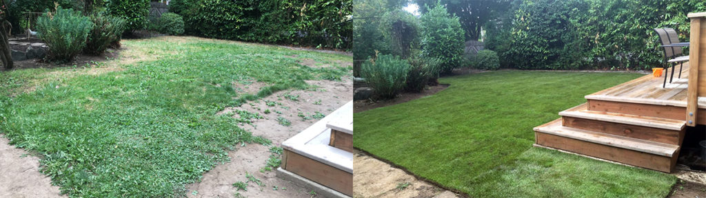 sod installation before-and-after-1